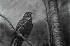 Steve_Miller-Consider-The-Ravens_PastelGraphics-Charcoal