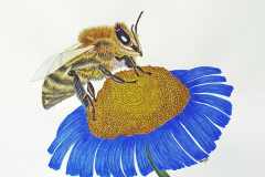 Linda_Clary-Busy_Bee_Watercolor