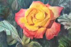 Toni_Wengler-Yellow-Rose-Pastel-Graphics