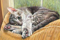 Wendy_Koehrsen-Corduroy-Cat-Pastel-Graphics
