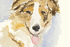 TerriHennessy-Shepherd-Watercolor-80
