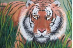 DonnaChambers-Tiger-in-the-Grass-PastelGraphics-250